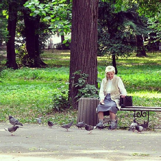 Grandma & pegions. Oldwomen Granny Pegions Park frankivsk westukraine ukraine украина бабушка парк женщина голуби франковск прикарпатье старость бабуся скамейка