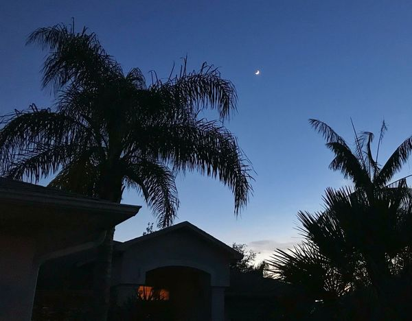 Moonrise Over Our Friends House Houseful Of Love Florida Moonrise Palms Silhouette Sebastian, Fl