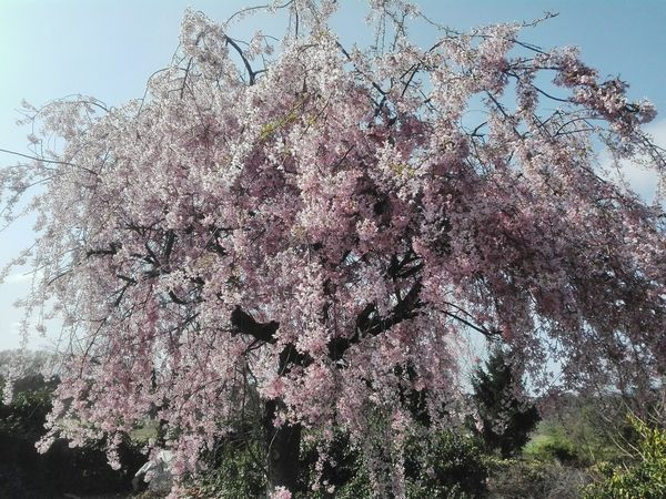 Sky Tree Nature No People Beauty In Nature Brianza Spring Time Springtime Spring Flowers,Plants & Garden Beauty In Nature Flowers Tree Nature