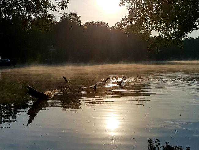 Beauty In Nature Nature Nature Photography Nature_collection Morning Light Morning Morgenstimmung See Seelandschaft Seascape Sealife Sea Naturephotography Water Swimming Lake Tree Reflection Silhouette Sky Coast Sunrise - Dawn Horizon Over Water
