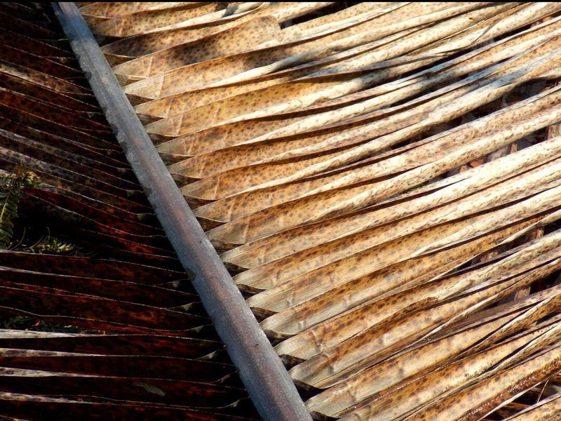 Palmleaf Beautiful Nature Botanical Garden Nature Photography Naturelover