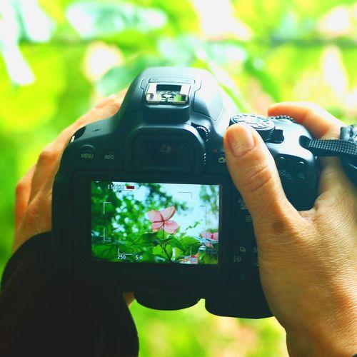Colorfull Garden Canon_photos Colorfull Flower Naturelovers Plants 🌱 Garden Photography Taking Photos Flowers Nature Photography