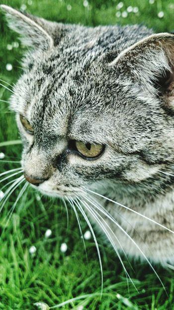 First Eyeem Photo Cat Wandering Hunter Nature Pet