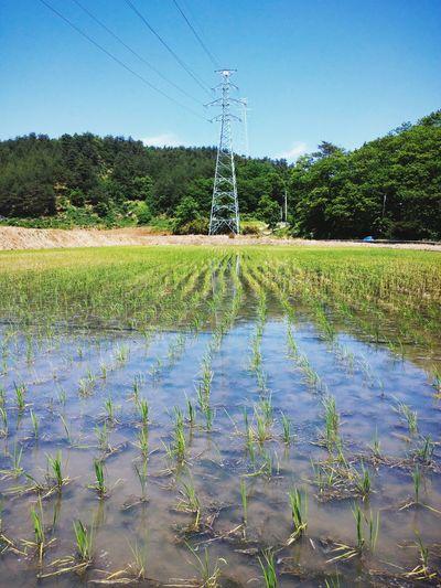 Countryside Rice Field Ricepaddies Agriculture Rural Scenes Korea