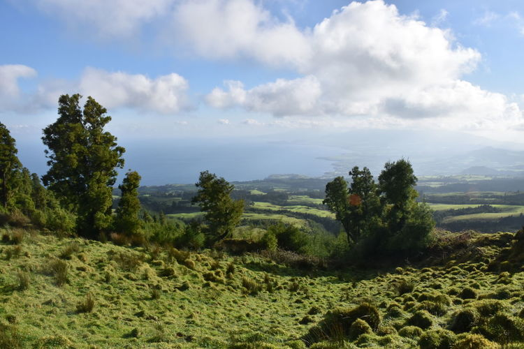 Volcanic environment on Sete Cidades, Sao Miguel island Plant Sky Cloud - Sky Beauty In Nature Landscape Environment Scenics - Nature Tranquil Scene Tree Tranquility Non-urban Scene Nature No People Day Green Color Land Growth Outdoors Idyllic Volcano