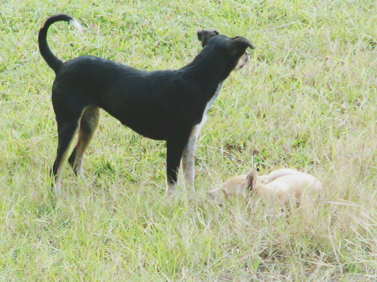 animal themes, grass, domestic animals, field, two animals, no people, mammal, day, pets, outdoors, nature