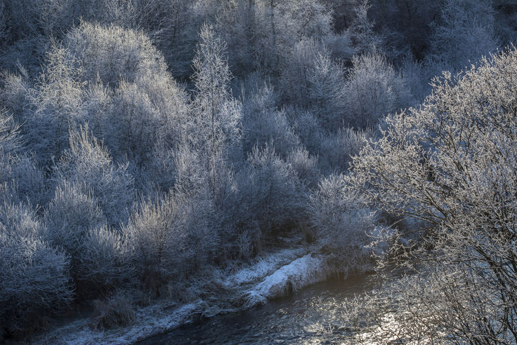 Cold Temperature Full Frame Galaverna Italy River Soft Rime Tree Trentino Alto Adige Winter