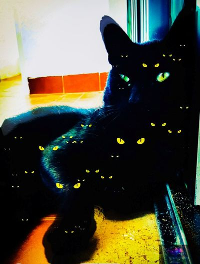 Straycat Stray Cat