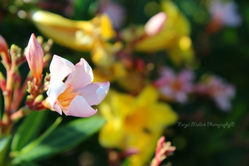 Happy Birth Day, Spring! #nature #StreamzooVille #flowers #spring #beautiful #colors #dof #depthoffield Summer Exploratorium Flower Head Flower Leaf Petal Close-up Plant In Bloom