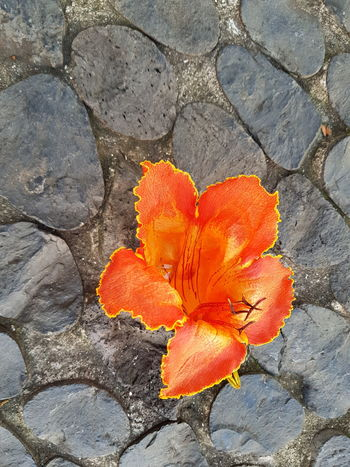 Orange Color Tree Blossom Pebble Stones Road Paving Copplestone Pebble Stones Bildfolge Photography Nature_collection Nature Photography Nature Day Outdoors Beauty In Nature High Angle View No People Flower Close-up Plant Fragility Sunlight Growth Flower Head Freshness Blooming Petal
