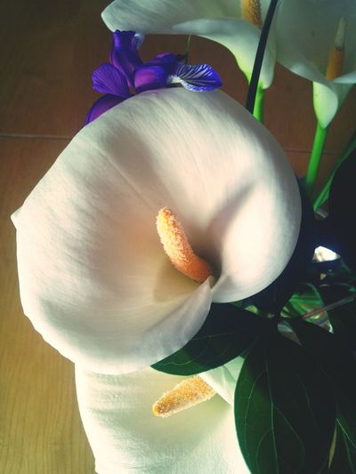 Calla Lily Welcome Spring! Flowers Sunday Morning