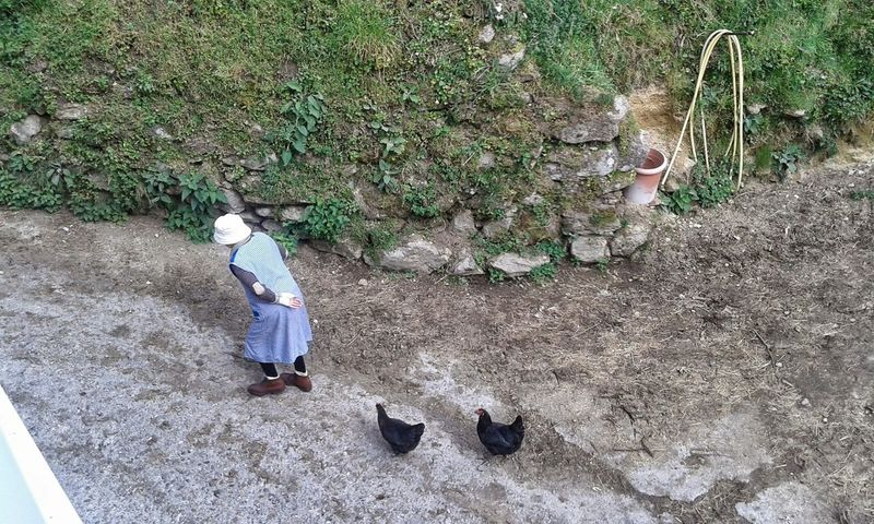 The Moment - 2015 EyeEm Awards Galicia, Spain No Filter Grandma Hens And Chickens Funny Rural Scenes