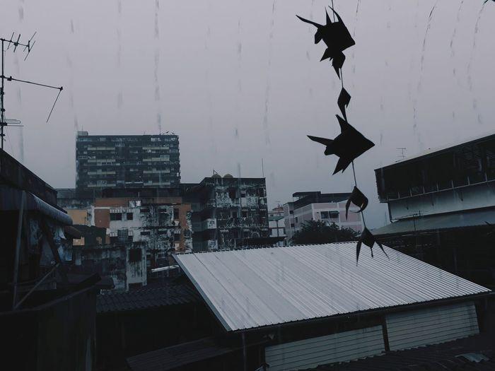 Day Rain Rainy