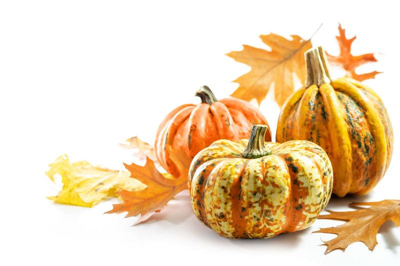 Close-up of orange pumpkins against white background
