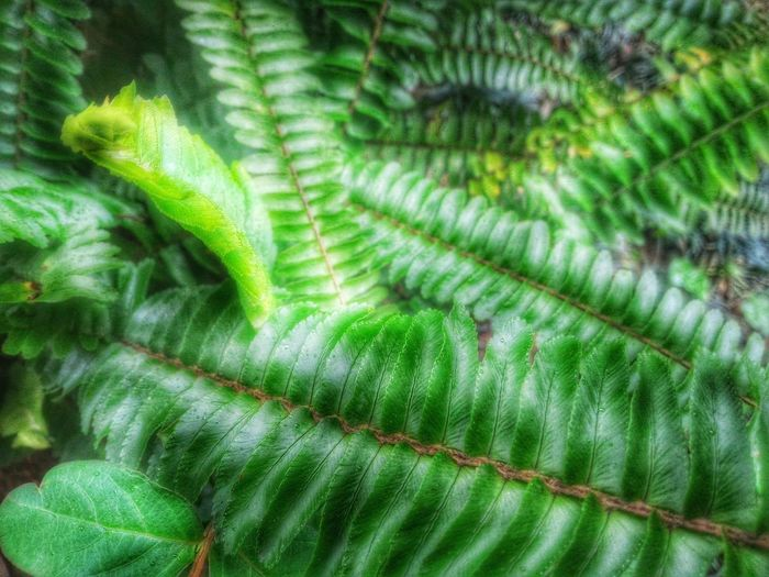 Dreamy Leaves Green Leaves Nature Photography Have A Lot Of Fun  Things I Like Mood Captures Artistic Photo Botany A Moment Of Zen... Inspired By Nature Spring Has Arrived Connected With Nature From My Point Of View Pattern, Texture, Shape And Form