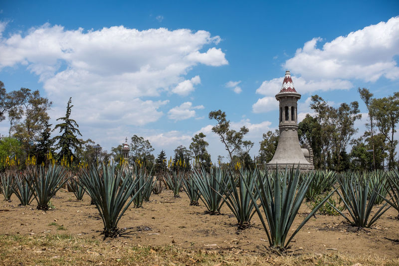 Bosque de Chapultepec Agave Architecture Beach Bosque De Chapultepec México Building Exterior Built Structure Cacti Cdmx Ciudad De México Cloud Cloud - Sky Cloudy Day Garden Growth Mexico Nature Outdoors Palm Tree Park Sand Sky Tranquil Scene Tranquility Tree