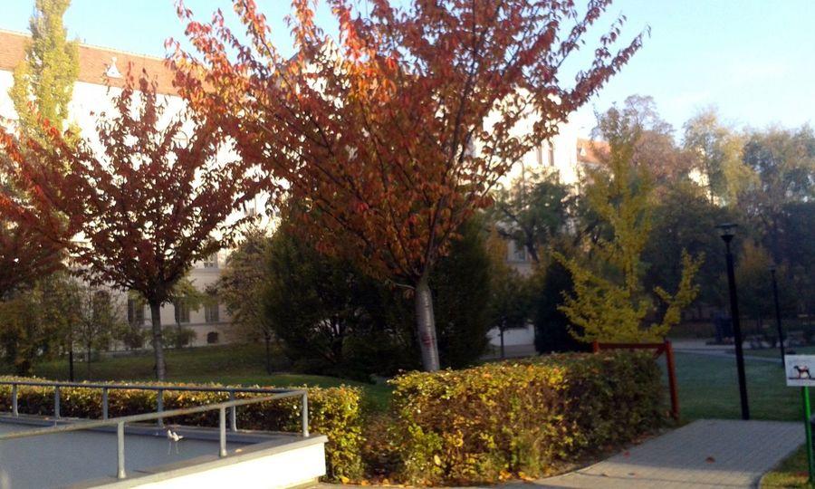 Autumn Colors Morning Sunshine