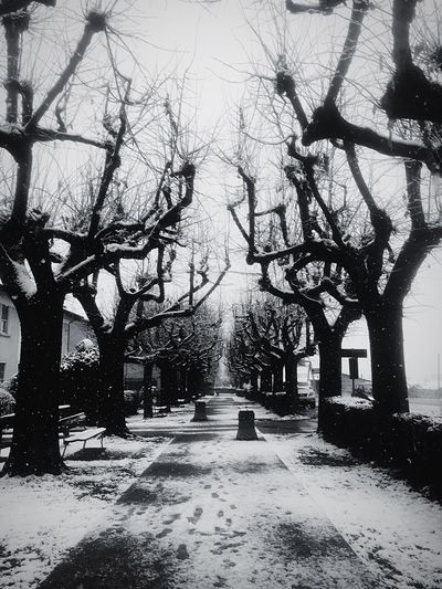 Creepy Boulevard EyeEm Best Shots - Black + White EyeEm Best Shots Villanova Mondovì Mondovì EyeEm Mondovì Snow Blackandwhite EyeEm Masterclass Tree Bare Tree Day Winter The Way Forward Nature Outdoors Snow Cold Temperature Sky No People