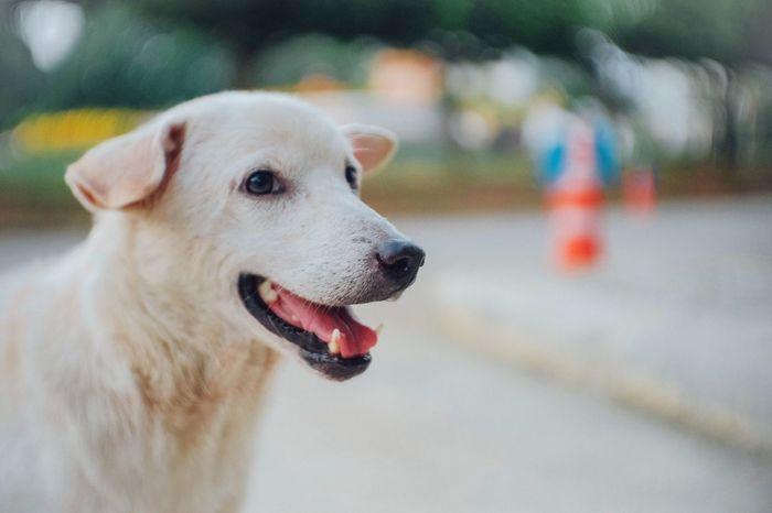 Dog Pets Fujifilm Fujifilm_xseries Fujixm1 Fujian 35mm F1.7