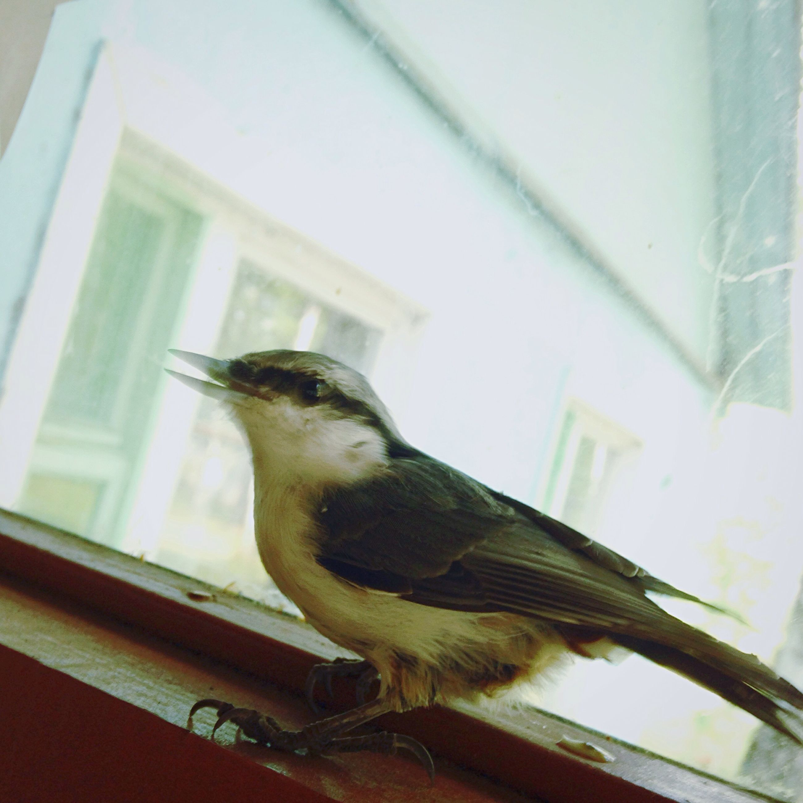 animal themes, one animal, bird, animals in the wild, wildlife, perching, side view, window, zoology, focus on foreground, beak, selective focus, animal head, no people