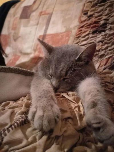 Pets Cats 🐱 Sleeping