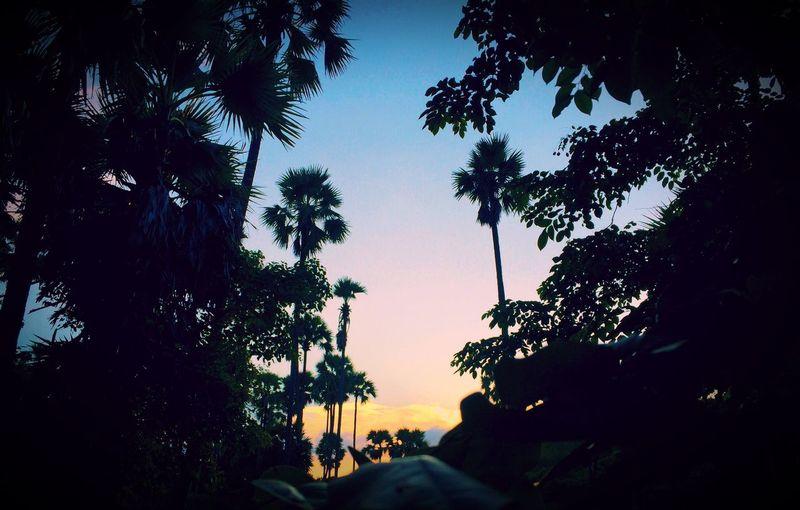 Feel The Nature Myanmar Dck