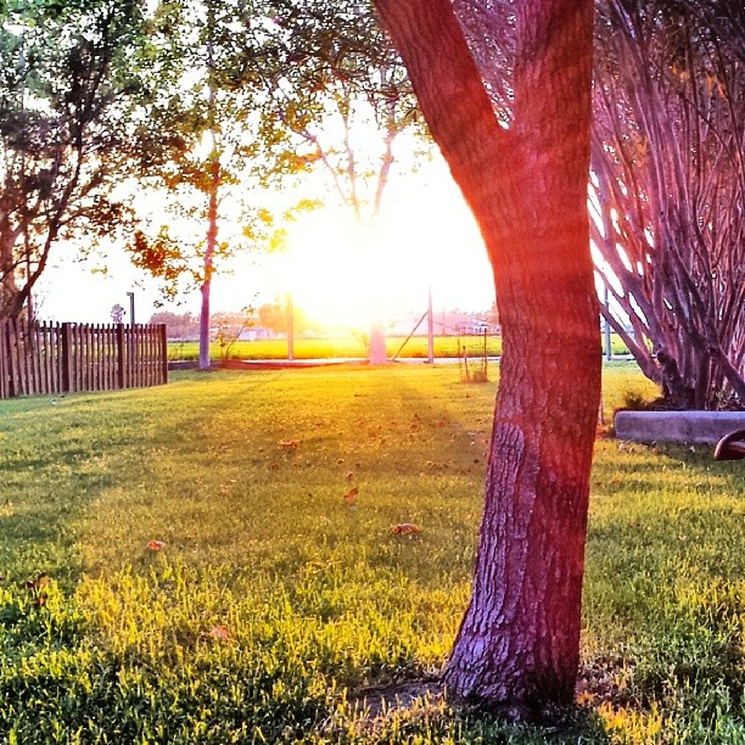 tree, grass, sunlight, sun, tree trunk, sunbeam, park - man made space, field, lawn, growth, grassy, lens flare, nature, tranquility, beauty in nature, built structure, green color, shadow, branch, landscape