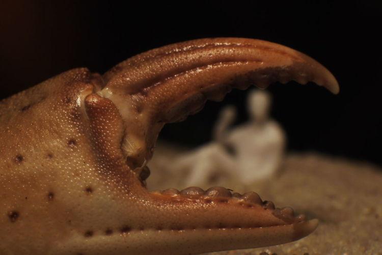 Close-up Seafood Sea Life Black Background No People Food Animal Wildlife Science Sea UnderSea Macroart Miniatureart