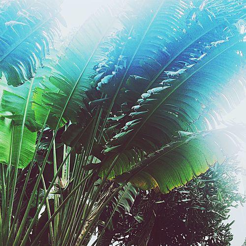 EyeEm Best Shots Travelphotography Travel Destinations Photographer Leaf Nature Green Color Plant Beauty In Nature Palm Fragility Freshness Eeyem Market Eeyem Followers EyeEm Best Edits EyeEm Gallery EyeEm Best Here EyeEm Adventure Newfrontier Fresh On Eyeem  EyeEm Best Shots - Landscape