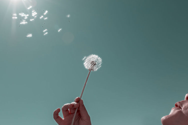 Dandelion seed against clear sky - Bright Dandelion Seed Drastic Edit Low Angle View Sunlight Adult Body Part Close-up Copy Space Dandelion Finger Flower Head Hand Holding Human Body Part Human Finger Human Hand Nature One Person Personal Perspective Real People Sky Softness Unrecognizable Person Women A New Perspective On Life Human Connection 17.62° My Best Photo