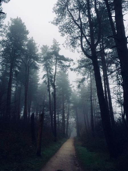 Tree Fog Forest Nature Landscape Tranquil Scene Beauty In Nature WoodLand The Way Forward Outdoors No People Scenics