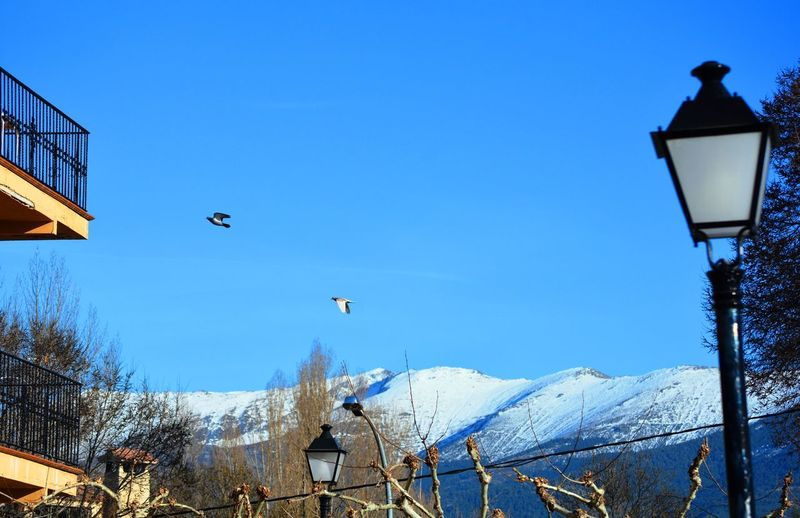 Birds flying over snow covered mountain against blue sky