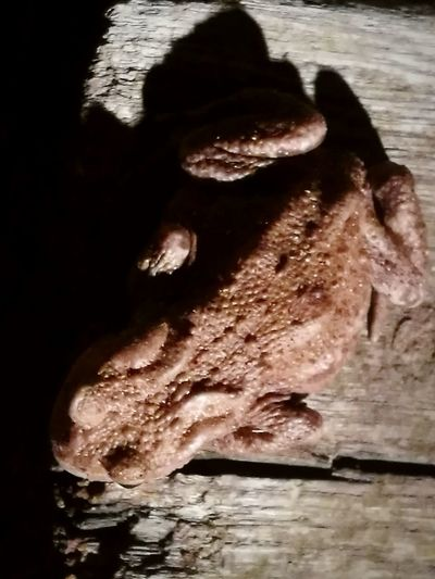 Close-up No People Animal Themes Nature Country Life Outdoors Beauty In Nature toad Nigth 🌜⭐️ Toads Reptile One Animal