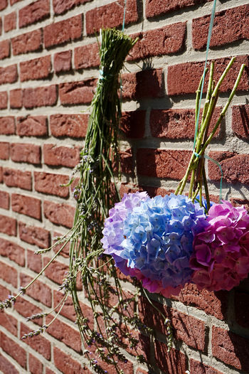 Close-up of flower pot against brick wall