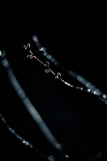 Close-up of water drops on plant at night