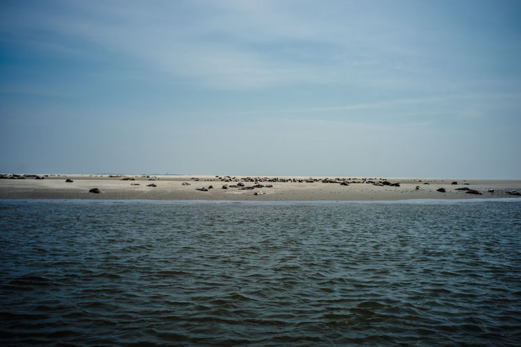 Water Sky Sea Beauty In Nature Nature Scenics - Nature Seals Seals On Beach Seals Chilling Northsea Nature Expedition Waterfront Tranquil Scene Tranquility No People Horizon Day Horizon Over Water Land Beach Non-urban Scene Group Of Animals Blue Outdoors