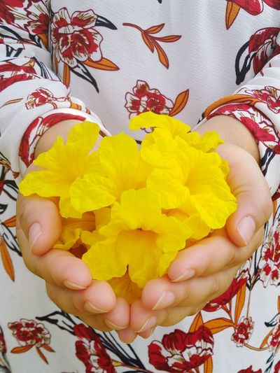 Close-up of hand holding yellow flowers