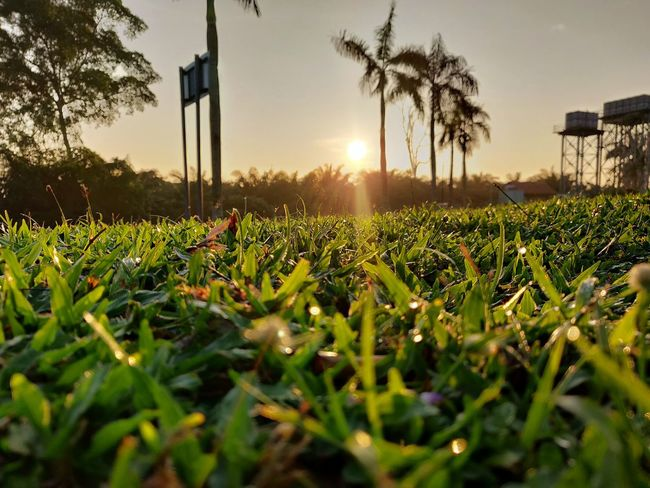 Sunset 🌄 1 Shotononeplus6 Nature_collection Nature Photography Nature_landscape Grass Tree Sunset Rural Scene Agriculture Sun Sunlight Field Sky Plant Shining Blade Of Grass Grass Area Plant Life