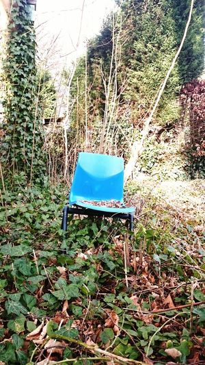 Chair Nature Took Over Lost Nature Blue Leaves And Branches Sunshine ☀ Urban Spring Fever Urbanphotography Urban Naturelovers Nature Taking Over Nature Takes Over Nature_collection Nature Photography Naturephotography Nature_collection Naturelover Chairswithstories Chairporn ChairArt Urbanexploration Urban Photography Urban Nature The Color Of Technology
