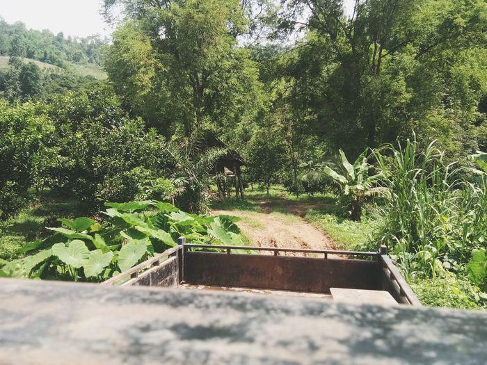 กลับบ้านกัน Tree Shadow Sunlight Sky Plant Growing Retaining Wall Terrace Domestic Garden Young Plant Garden Creeper Plant Fungus Greenhouse Plant Nursery Calm Stalk Green Toadstool Leaf Vein Ivy Soil Topiary Lily Pad Growth