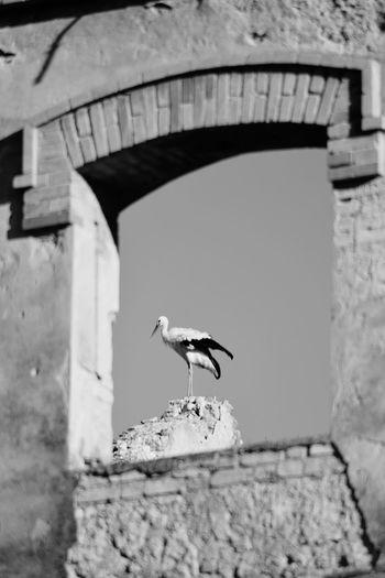Bird Stork One