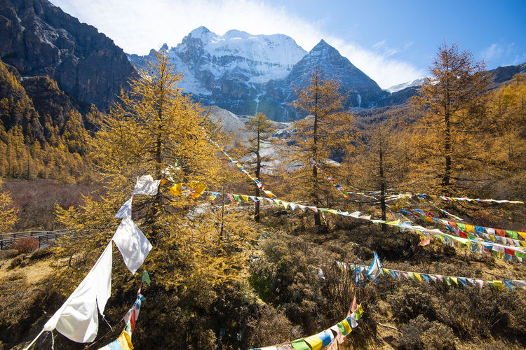 Bunting on trees against snowcapped mountains