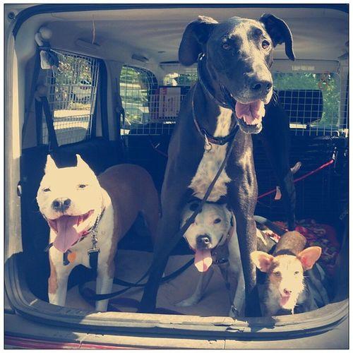 Coldbrew Howdofitinthere Nissancube Tinyboxcar Greatdane Pinholecoffeee Cooperhound Floydpup
