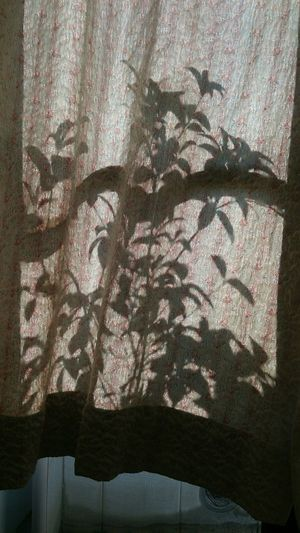 Sheet Curtain Textile Shadow Fabric Close-up