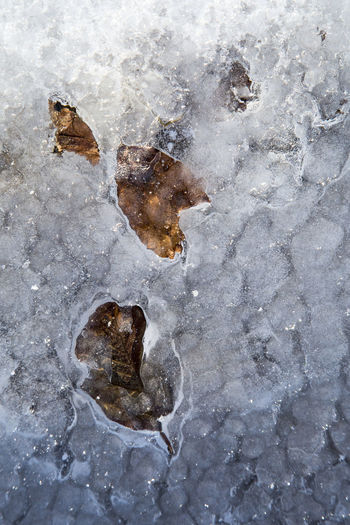 Ice Ice Trapped Trapped In Ice Trapped In The Ice Leaves Iced Leaf Close-up Cold Temperature Day Nature No People Outdoors Shades Of Winter