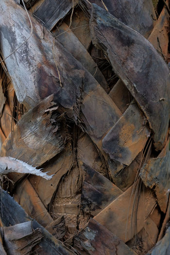 High angle view of dried leaves on land