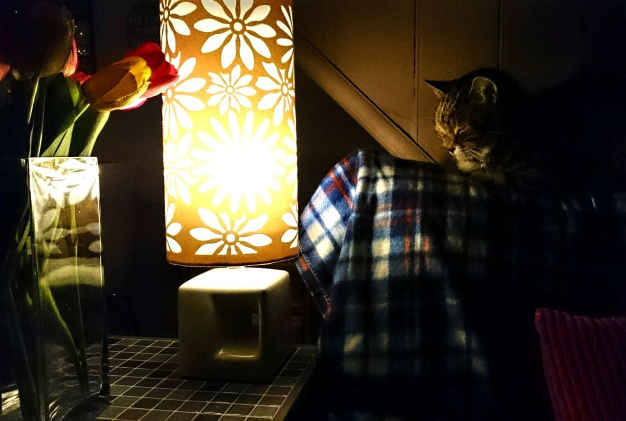 Illuminated Floral Lamp Shade Amidst Cat And Tulips At Home
