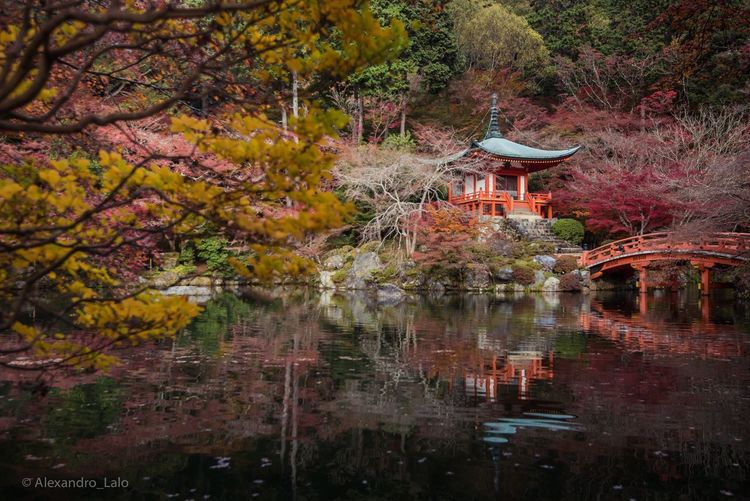 Autumn in Daigo-Ji Love Temple Lake Tree Autumn Built Structure Nature Architecture No People Beauty In Nature Outdoors Day Branch Building Exterior Scenics Water