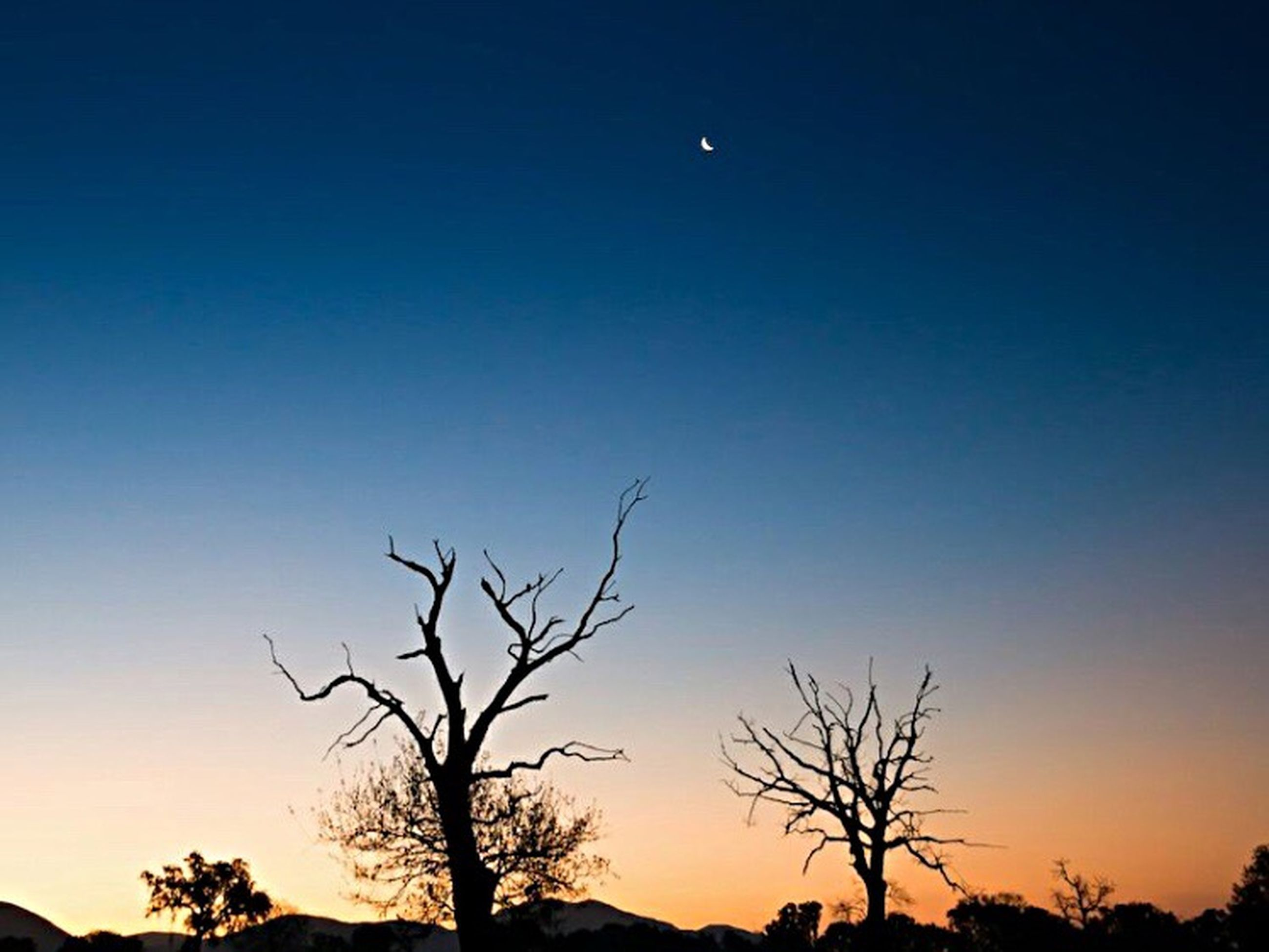 silhouette, bare tree, tree, low angle view, tranquility, clear sky, sunset, scenics, beauty in nature, tranquil scene, branch, nature, moon, blue, copy space, sky, dusk, idyllic, outdoors, no people
