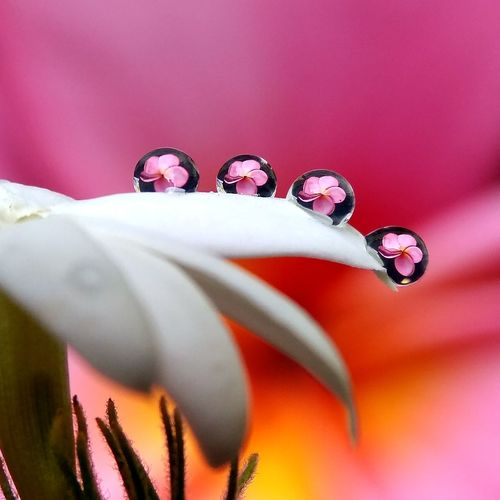💕🌼💕 Droplets
